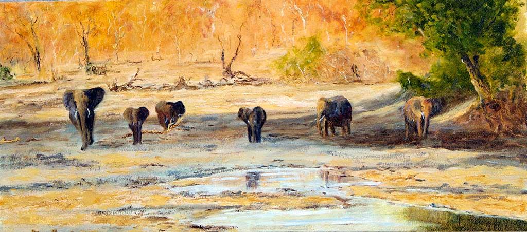 Ngala Elephant Sundowner